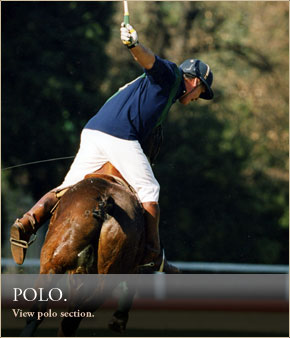 Polo Clinic & Lessons